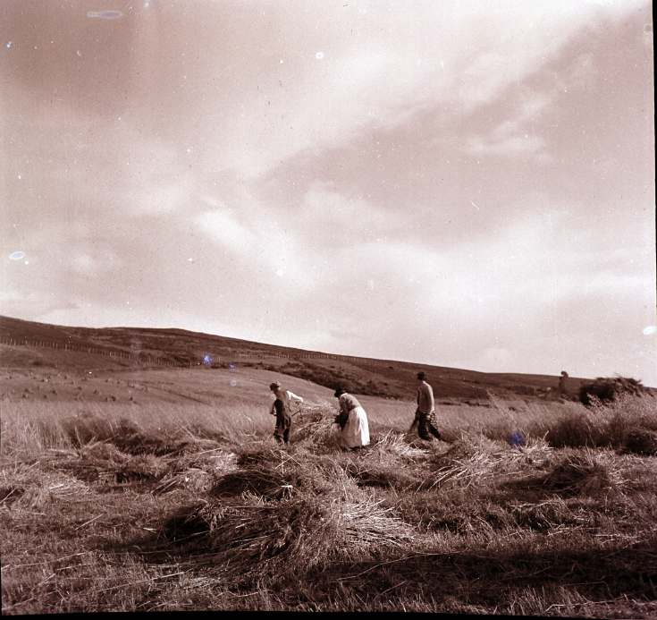 Harvest in the Highlands